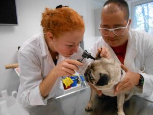 10.3.1.a_Praktično usposabljanje veterinarskih tehnikov